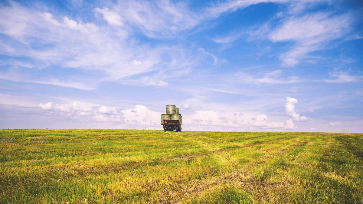 Finanziamenti a fondo perduto: bando regione Abruzzo per l'agricoltura
