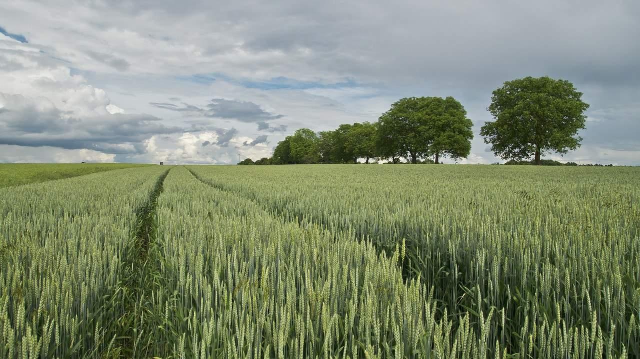 Bandi regione Veneto: agricoltura incentivi per i giovani