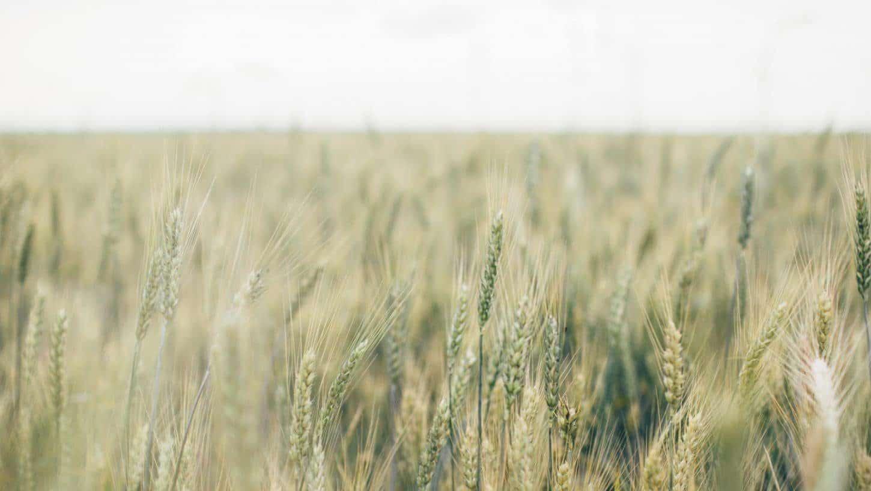 Finanziamenti Regione Abruzzo: ecco il bando per l'agricoltura